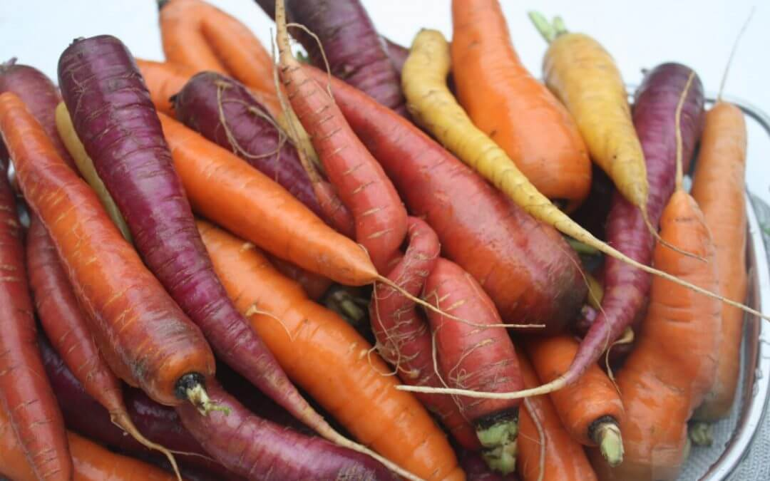 Vergeten groente: rode wortel