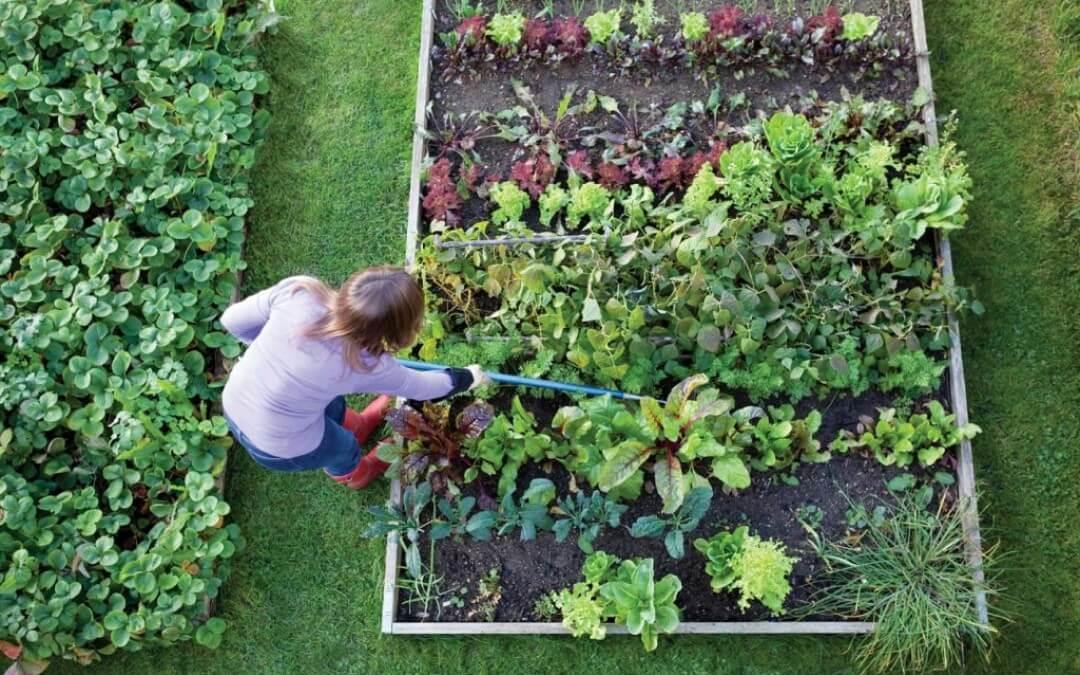 Groentetuin: de voorbereidingen