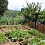 Groentetuin: de tuin in, het balkon op!