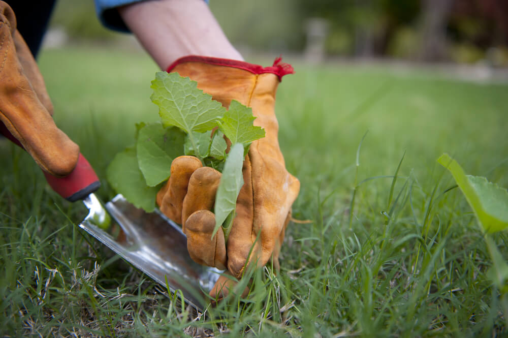 Groentetuin: weg met onkruid!