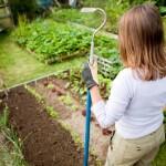 Groentetuin: voorbereiden op de herfst