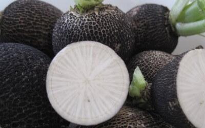 Vergeten groente: rammenas