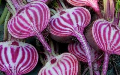 Vergeten groente: gemarineerde chioggiabiet met pesto