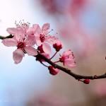 Ayurveda: de wisseling van de seizoenen