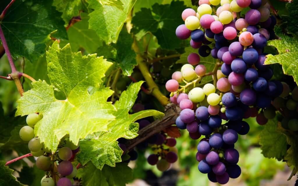 It's Organic: bio vegan wijn + WINACTIE