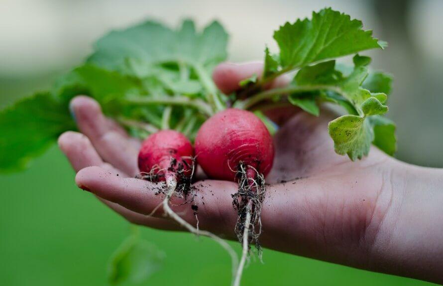 Vegetarisch dilemma: plantaardig eten