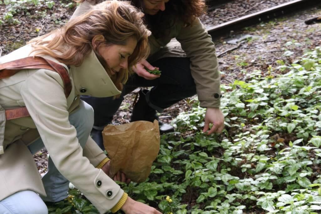 Wildplukken: zelf aan de slag