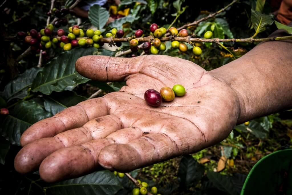 Hoe wordt koffie gemaakt?