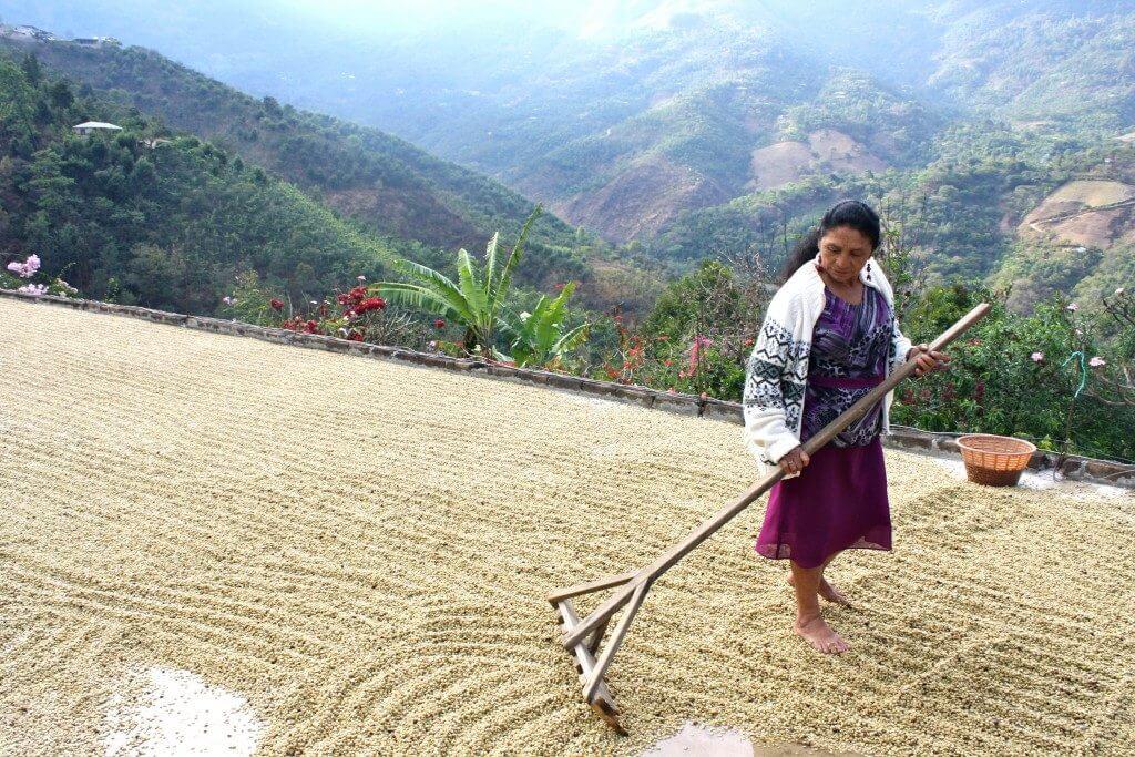 Koffieboerin Leonarda in Guatemala droogt de ontpulpte koffiebessen op het dak van haar huis in de zon.