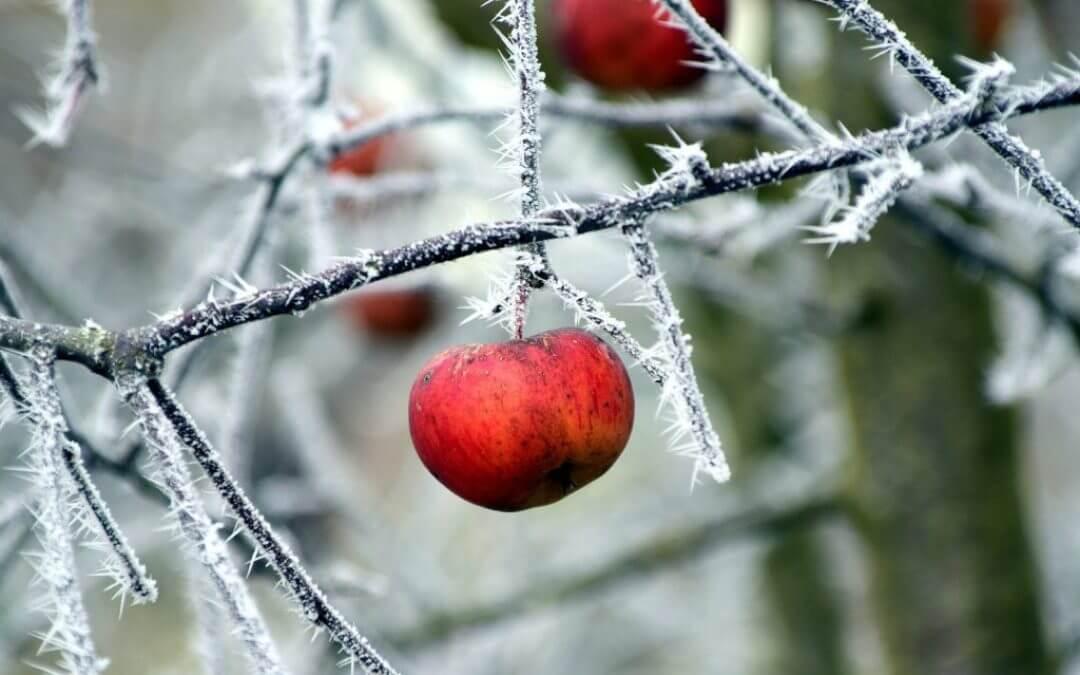 Deze vitamines helpen jou de winter door!