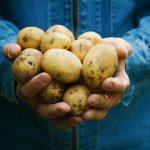 Lesje aardappelrassen