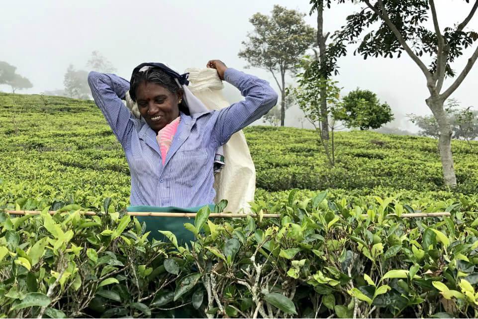 Wie plukt jouw thee? Ontmoet de theeplukkers van Fair Trade Original