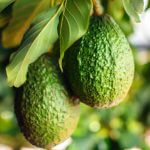 Waarom wij zo'n fan zijn van avocado