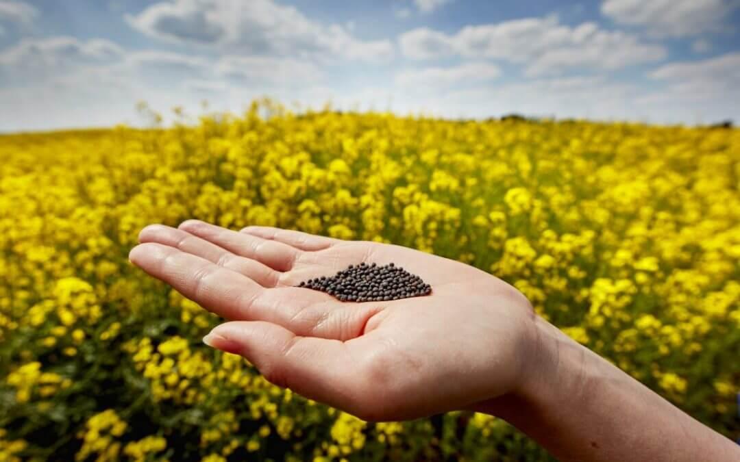Plantaardige olie met Omega 3 en Omega 6 vetzuren