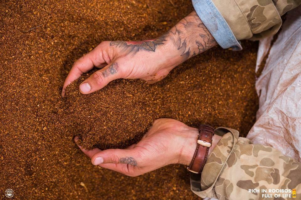 Van pure Zuid-Afrikaanse Rooibos tot BOS Ice Tea Rooibos