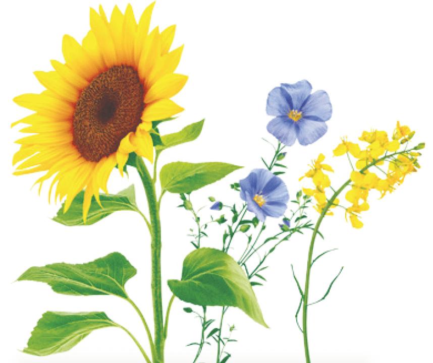 Plantaardige olie met omega 3 en omega 6 vetzuren & gezondheidsvoordelen