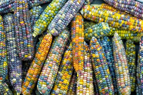 Instagram trend: Rainbow Corn