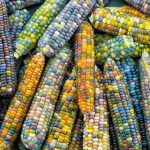 Instagram trend: Rainbow Corn