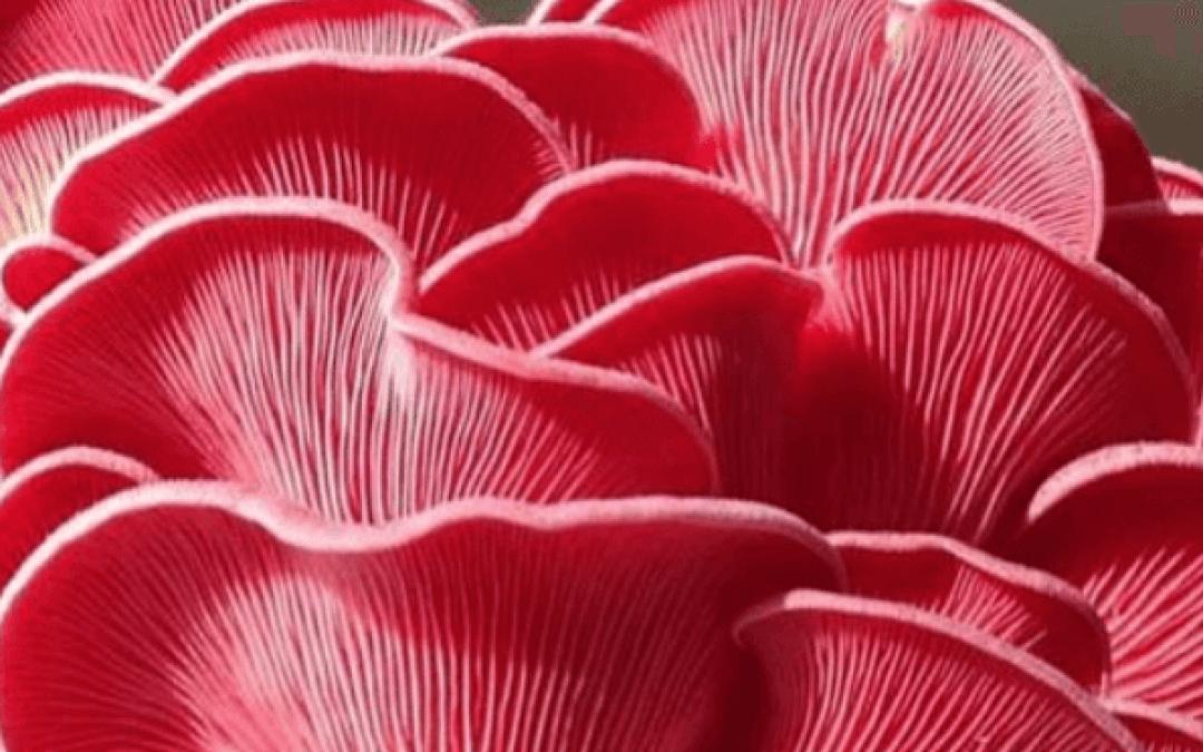 Instagram trend: Valentijn Food