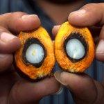 Palmolie: hoe slecht is het nu echt?