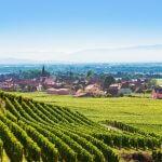 Alles over de Franse Elzas en haar Pinot Blanc