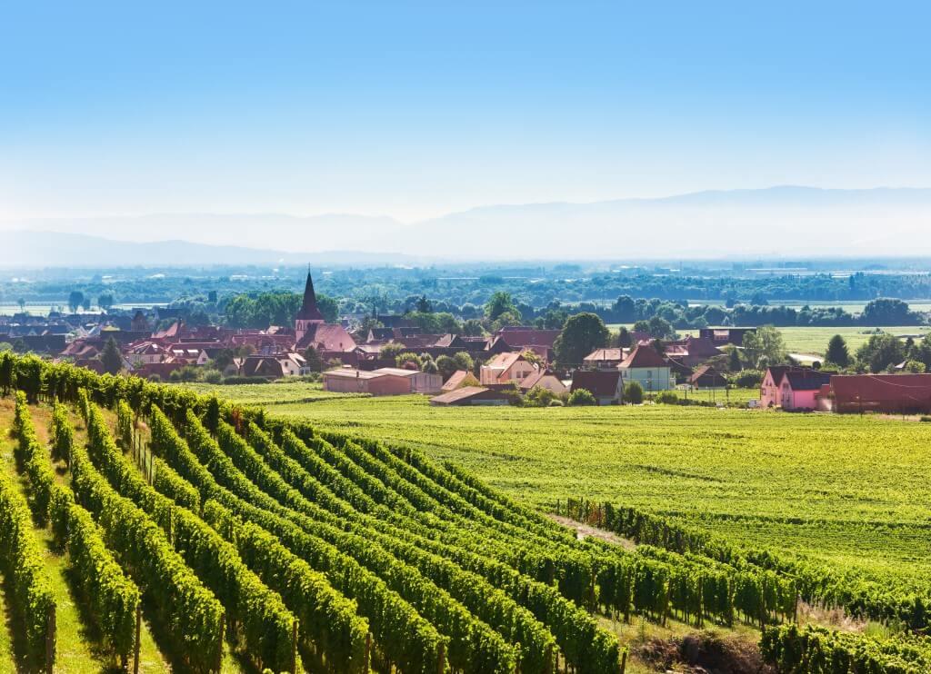 Alles over de wijn uit de Elzas