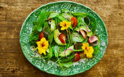 Wild Plukken: salade van veldzuring en Oost-Indische kers