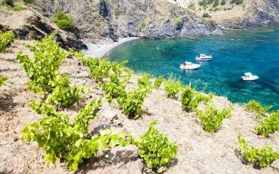 6 x wat je moet weten over wijn uit de Franse Roussillon