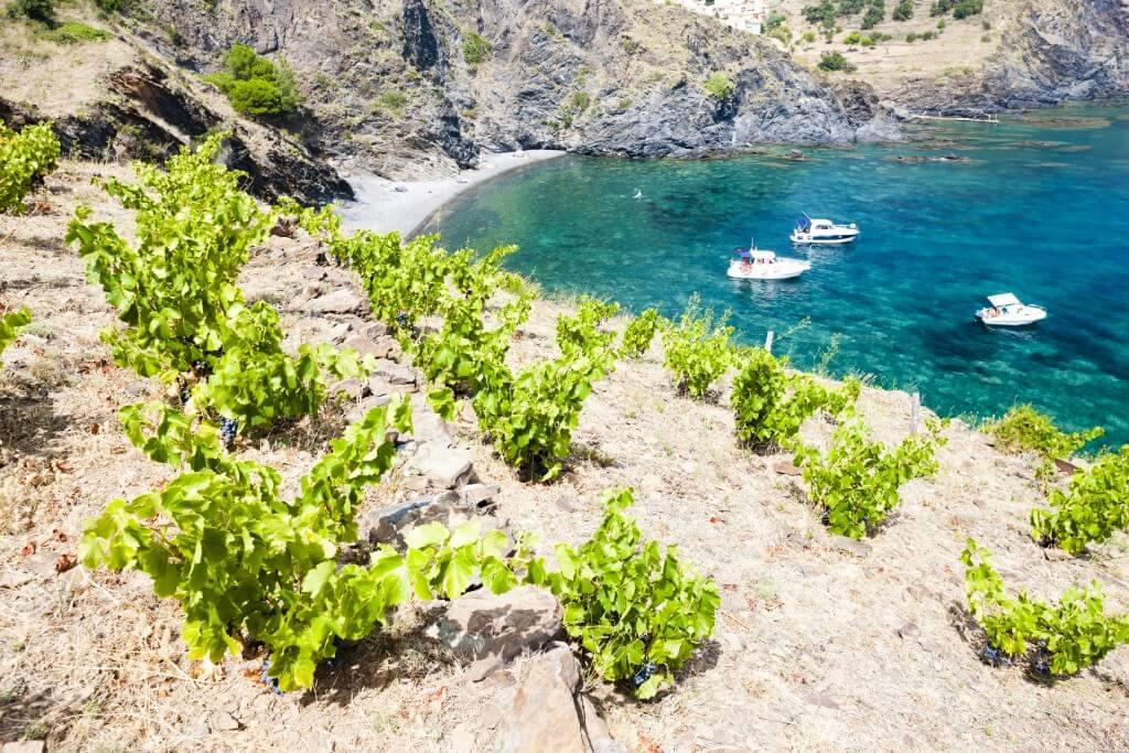 Wat je moet weten over wijn uit de Roussillon