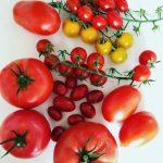 Tomatenrassen: hoe zit het met cherry, snoep en trostomaat?