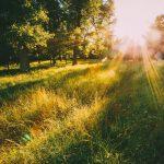 Winter is coming: hoe voorkom je een vitamine D tekort?
