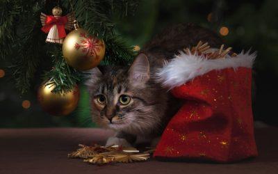 Tips voor diervriendelijke feestdagen