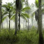 Een voedingsindustrie zonder palmolie?