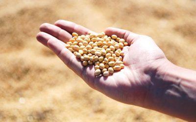 Plantaardige vervanger voor vlees: soja