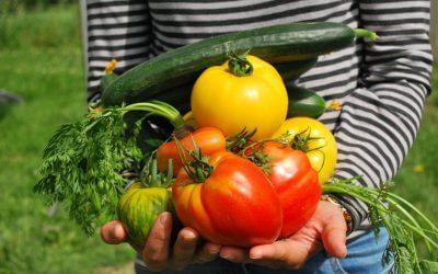 Welke groenten bevatten de meeste voedingsstoffen?